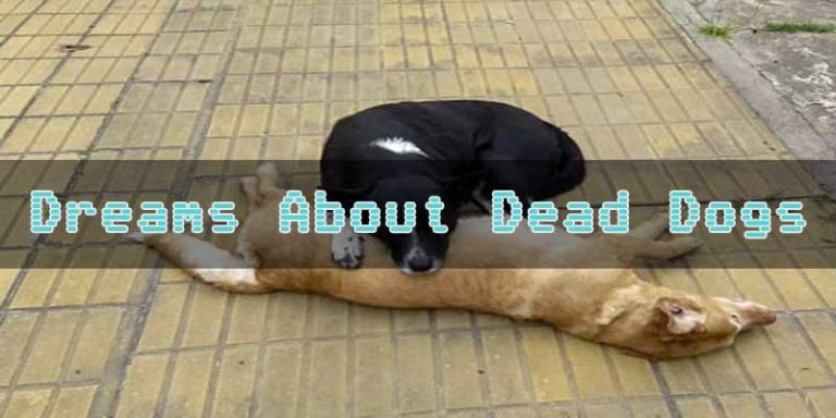 6 Dreams About Dead Dogs - What Does Dreams About Dead Dogs Mean