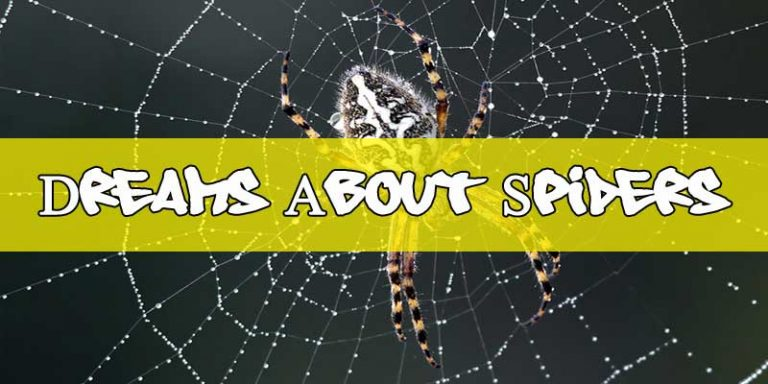 Dreams About Spiders: What Does It Mean When You Dream About Spiders