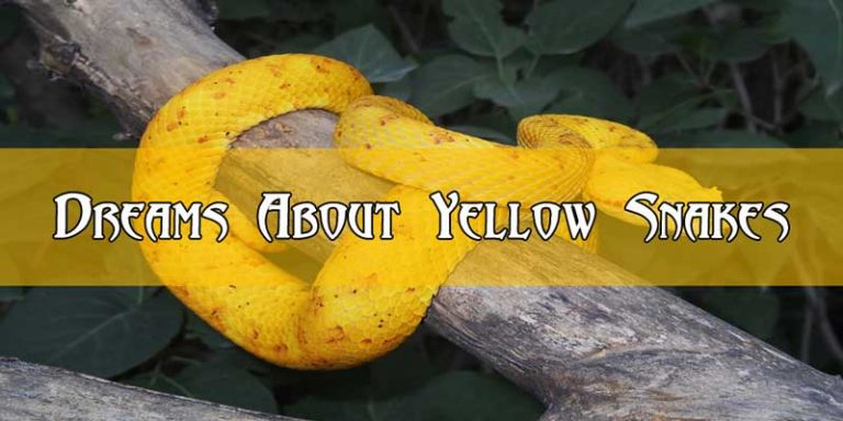 Dreams About Yellow Snakes : Good or Bad ?