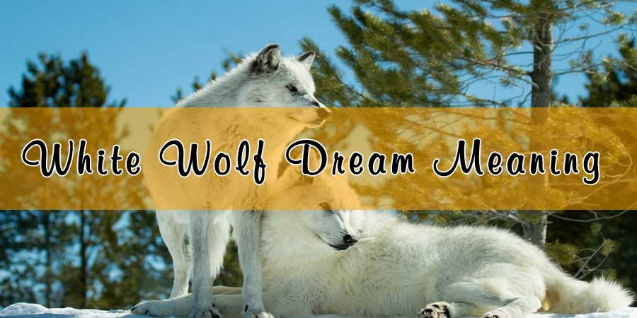 White Wolf In Dream White Wolf With Blue Eyes Seeing A White Wolf