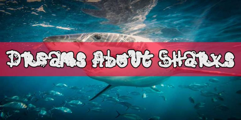 Dreams About Sharks - Dreams of Sharks - Shark Dream Meaning