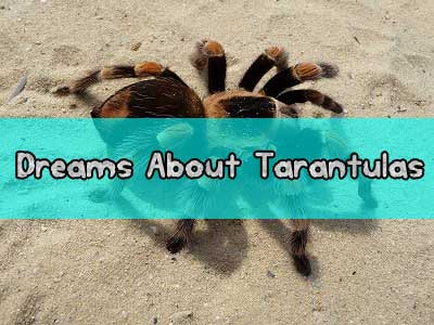 Dreams About Tarantulas