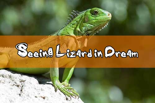 14 Seeing Lizard in Dream is Good or Bad - What Does Dreams