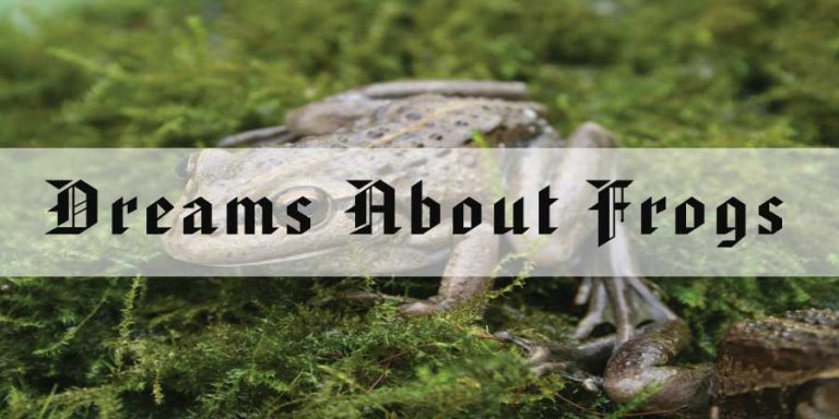 15 Dreams About Frogs - Meaning and Interpretation
