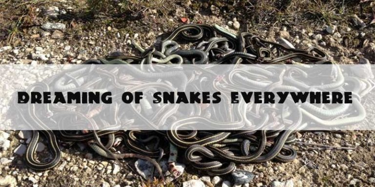 Dreaming of Snakes Everywhere - Dreaming About Snakes Everywhere