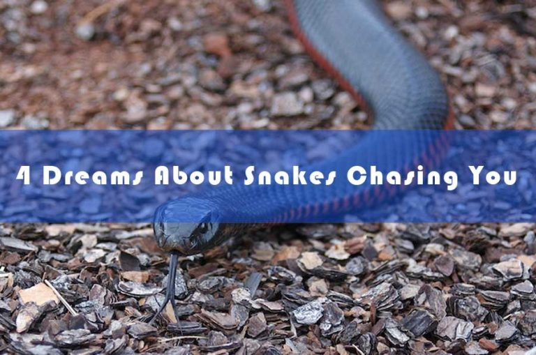 Dreams About Snakes Chasing You - Dream about Being Chased by Snakes