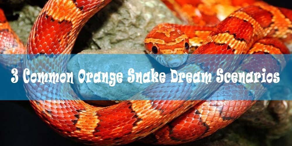 25 Dreams about Orange Snakes: Meaning & Interpretation
