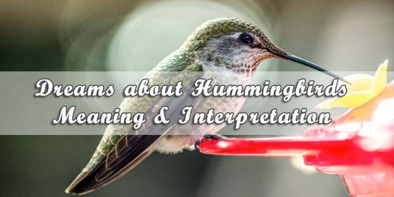 Dreams about Hummingbirds: Meaning & Interpretation