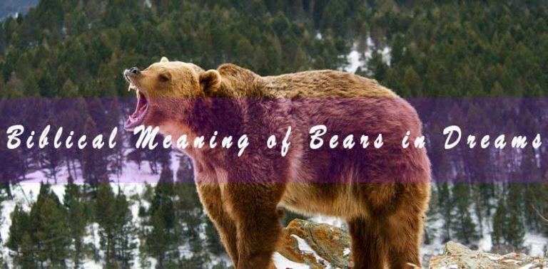 Biblical Meaning of Bears in Dreams & Interpretation