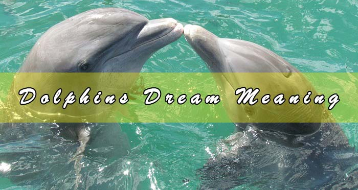 Dolphins Dream Meaning - Dreams About Dolphins & Interpretation