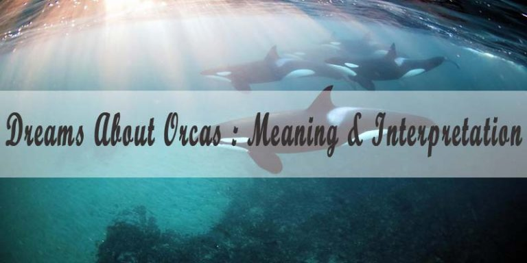 Dreams About Orcas : Meaning & Interpretation