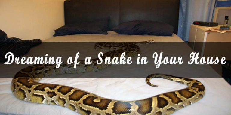 Dreaming of a Snake in Your House