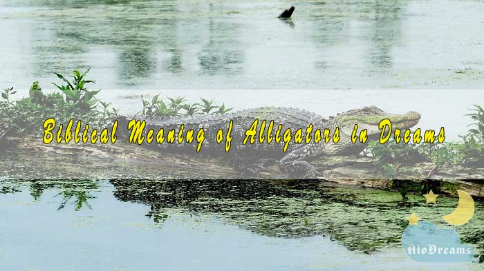 #10 Biblical Meaning of Alligators in Dreams