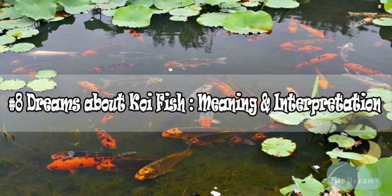 #8 Dreams about Koi Fish : Meaning & Interpretation