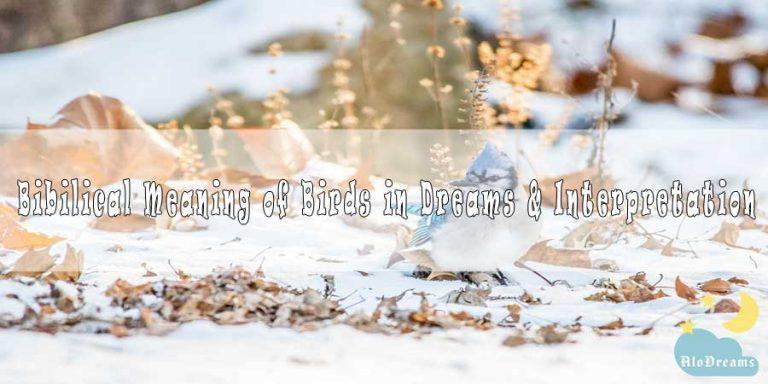 #52 Bibilical Meaning of Birds in Dreams & Interpretation