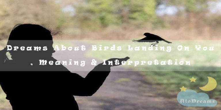 Dreams About Birds Landing On You , Meaning & Interpretation