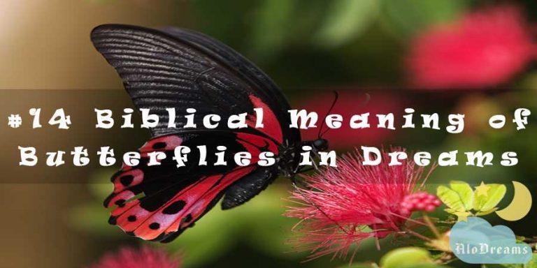 Biblical Meaning of Butterflies in Dreams