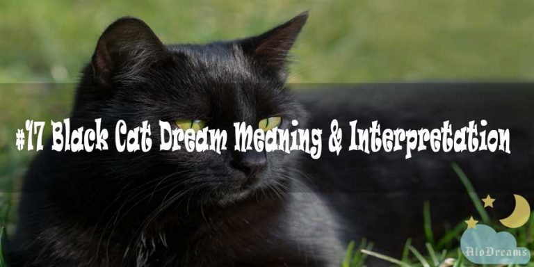 #17 Black Cat Dream Meaning & Interpretation