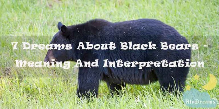 7 Dreams About Black Bears - Meaning & Interpretation
