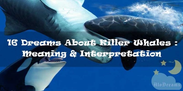 16 Dreams About Killer Whales : Meaning & Interpretation