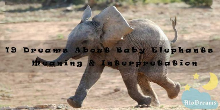 19 Dreams About Baby Elephants - Meaning & Interpretation