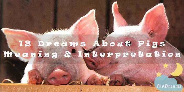 12 Dreams About Pigs - Meaning & Interpretation