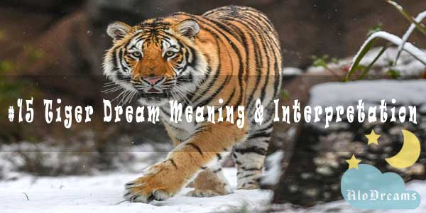 #15 Tiger Dream Meaning & Interpretation