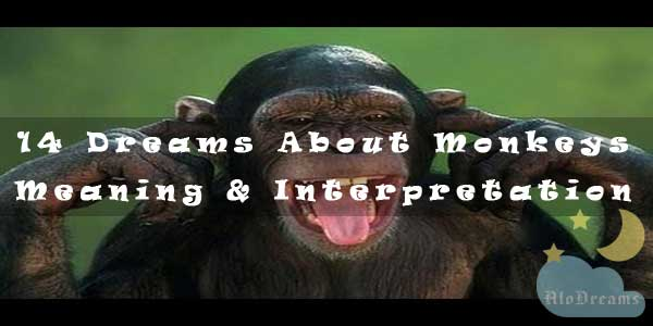 14 Dreams About Monkeys - Meaning And Interpretation