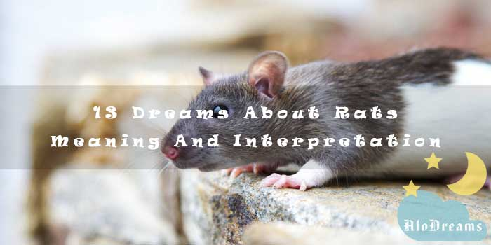 13 Dreams About Rats - Meaning And Interpretation