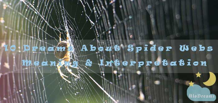 10 Dreams About Spider Webs - Meaning & Interpretation