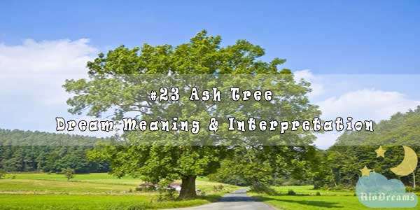 #23 Ash Tree - Dream Meaning & Interpretation