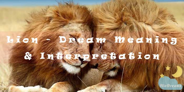 #48 Lion - Dream Meaning & Interpretation