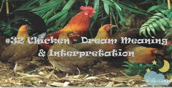 #32 Chicken - Dream Meaning & Interpretation