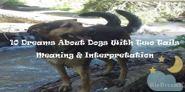 10 Dreams About Dogs With Two Tails - Meaning & Interpretation