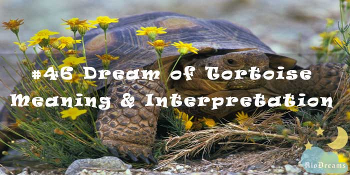 #46 Dream of Tortoise - Meaning & Interpretation