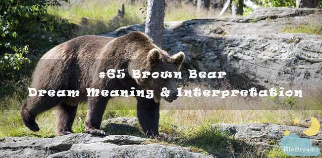 #65 Brown Bear - Dream Meaning & Interpretation