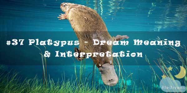#37 Platypus - Dream Meaning & Interpretation