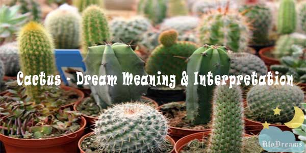 #82 Cactus - Dream Meaning & Interpretation