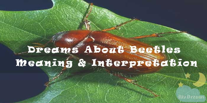 Dreams About Beetles : Meaning & Interpretation