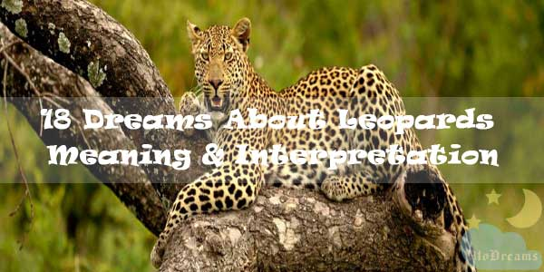 18 Dreams About Leopards : Meaning & Interpretation