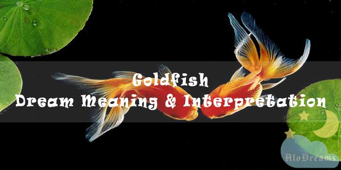 #13 Goldfish - Dream Meaning & Interpretation