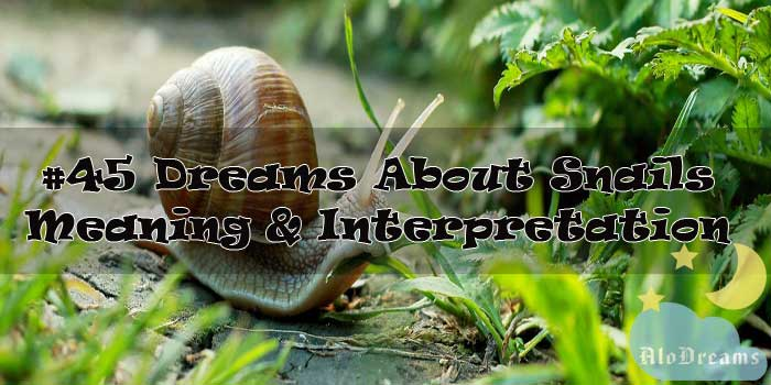 #45 Dreams About Snails : Meaning & Interpretation