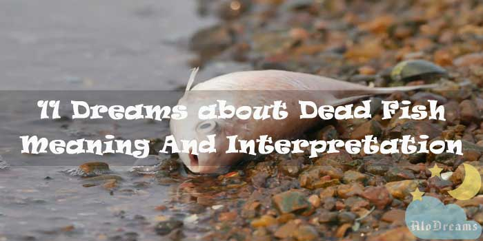 11 Dreams about Dead Fish - Meaning And Interpretation