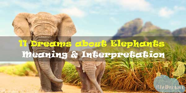 11 Dreams about Elephants : Meaning & Interpretation