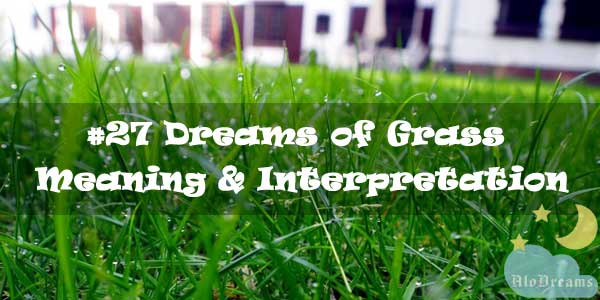 #27 Dreams of Grass - Meaning & Interpretation