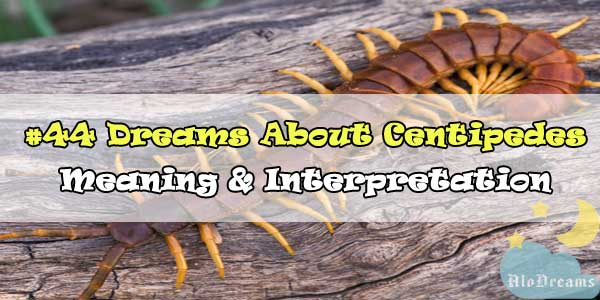 #44 Dreams About Centipedes , Meaning & Interpretation