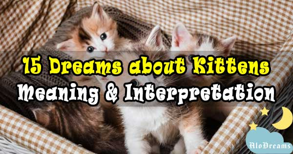 15 Dreams about Kittens : Meaning & Interpretation