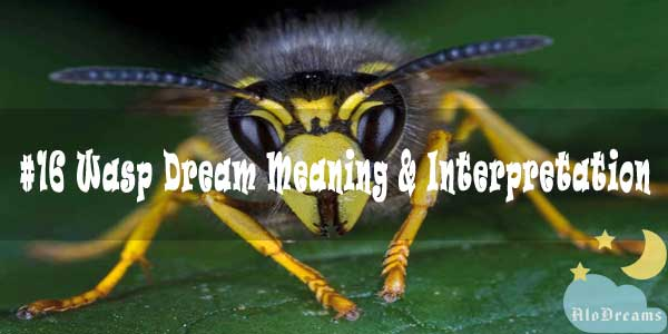 #16 Wasp Dream Meaning & Interpretation