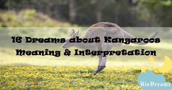 16 Dreams about Kangaroos , Meaning & Interpretation