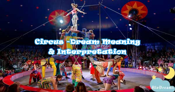 #65 Circus - Dream Meaning & Interpretation